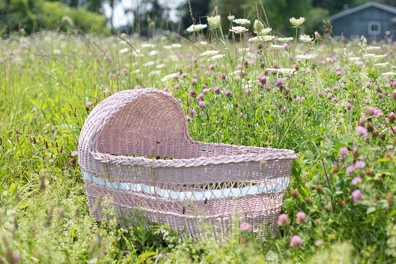 pink bassinet in the middle of the yard