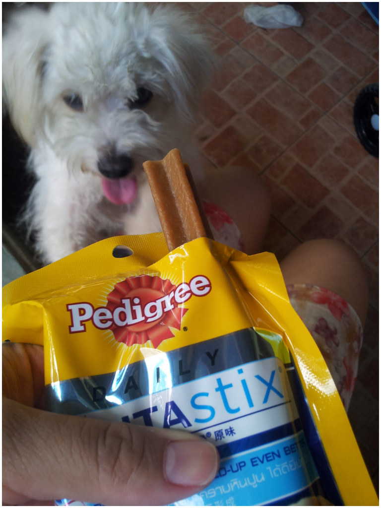 A person is holding the dentastix dog treat while the puppy s excited for it